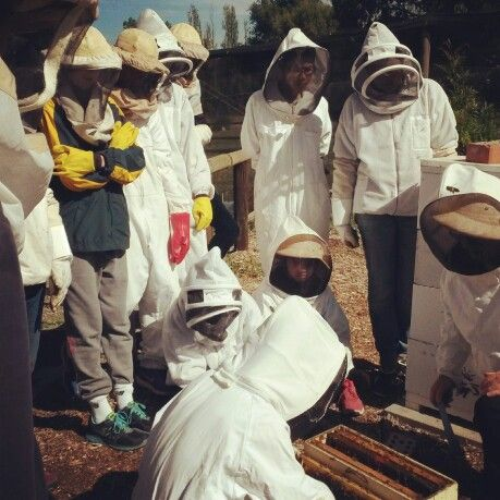 Collingwood childrens farm VAA apiary site