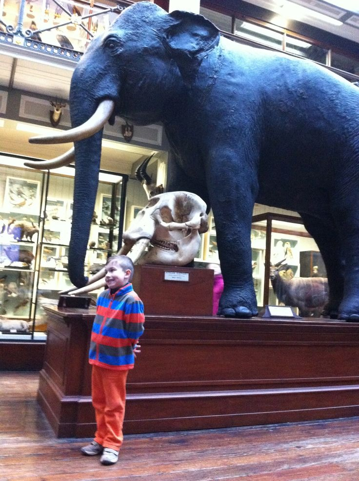 I feel so small compared to this elephant.