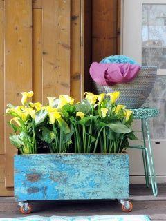 Spannende Kontraste im Retro-Design #calla #outdoor #pflanze #plant #pflanzenfreude