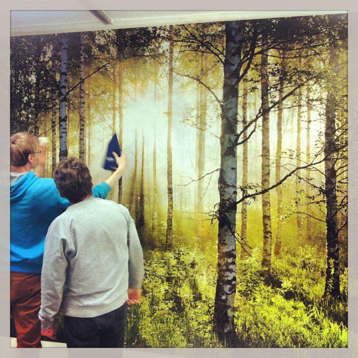 #birch #wall