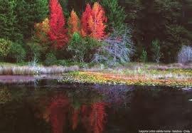 Bosque valdiviano Sur de Chile