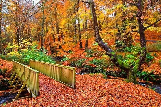 Crawfordsburn Country Park, County Down, N.I