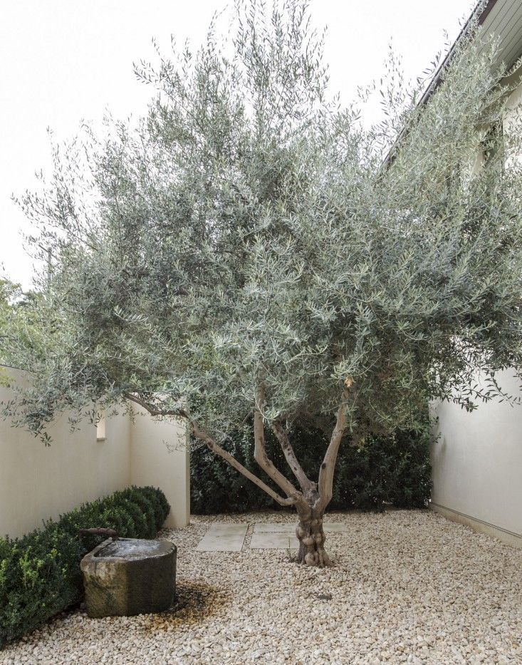 Simple Landscaping Ideas: 10 Genius Gardens with an Olive Tree (Gardenista: Sourcebook for Outdoor Living)