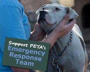 Support PETA's Emergency Response Team