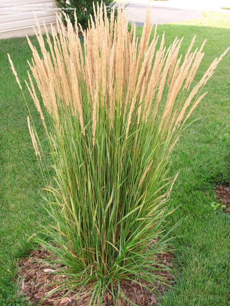 44 best ornamental grass ground covers images on for Ornamental grass garden ideas