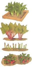 An article from Mother Earth News including instructions on planting a strawberry, asparagus, rhurbarb and horseradish bed that will last generations.