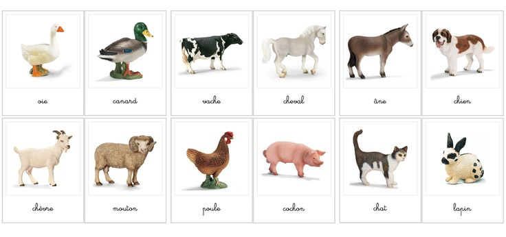 animaux de la ferme activit s autonomes pinterest animaux. Black Bedroom Furniture Sets. Home Design Ideas