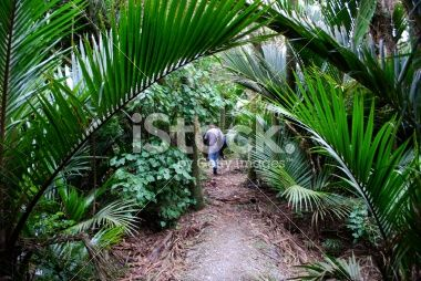 Lone Man disappears into the sub-tropical New Zealand Bush Royalty Free Stock Photo