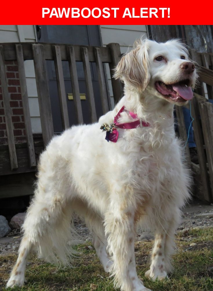 Please spread the word! Cassie was last seen in Des Moines, IA 50316.  Description: cassie is 13 yrs old, DEAF, loves everybody,wearing pink collar w/tags, micro chipped, faded tattoo on underside of one of her ears  Nearest Address: Euclid and E 14th st Des Moines