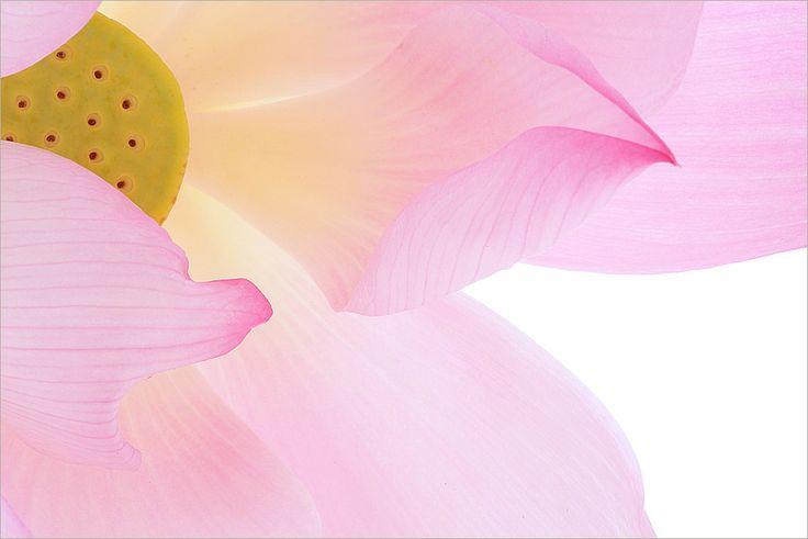 """Consultate il mio progetto @Behance: """"Estetica Fiore di Loto"""" https://www.behance.net/gallery/34983255/Estetica-Fiore-di-Loto"""
