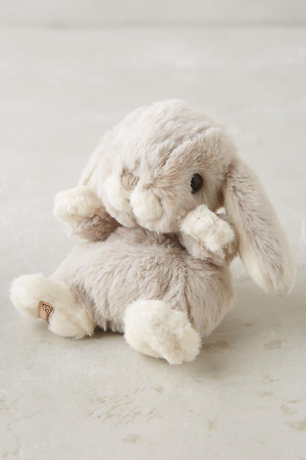 Cottontail Bunny