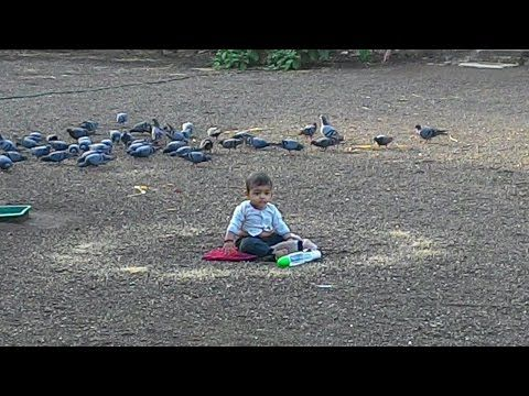 cute baby playing with birds funny video | cute baby funny videos -  #bird #birds  #birding #animale #bird_watchers_daily #animal #birdwatching #pets #nature_seekers #birdlovers Cute babies funny videos.amazing videos you can not stop your laughing. In this video you are watching : cute baby playing with animals cute baby funny videos Thanks for view my... - #Birds