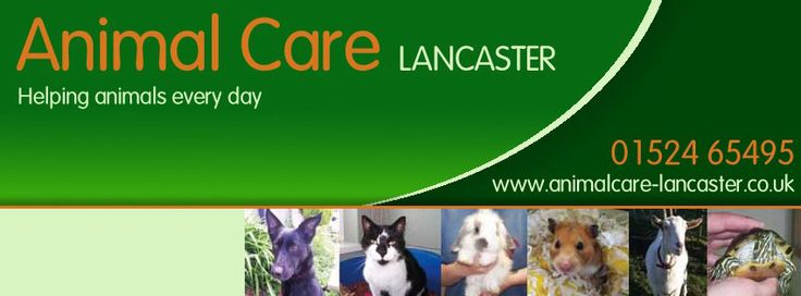 Web Banner For Animal Shelter Google Search Gcse It