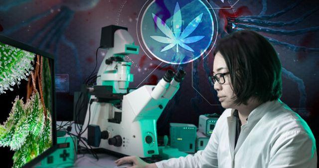 Das National Cancer Institute (Nationales Krebs-Institut), eine von der US-Regierung geförderte Einrichtung, hat jüngst seine Informationen über Cannabis aktualisiert und dabei zugegeben, dass Cann…