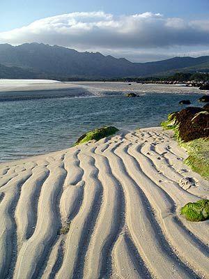 """En la playa de Carnota hay un jardín en cada duna, y que decir del humedal o de """"boca do río"""". Galicia  Spain"""