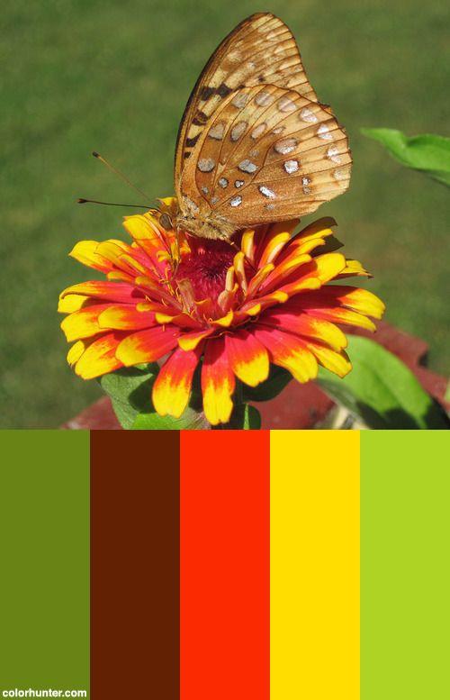 Speyeria+Cybele+(great+Spangled+Fritillary+Butterfly)+(newark,+Ohio,+Usa)+6+Color+Scheme