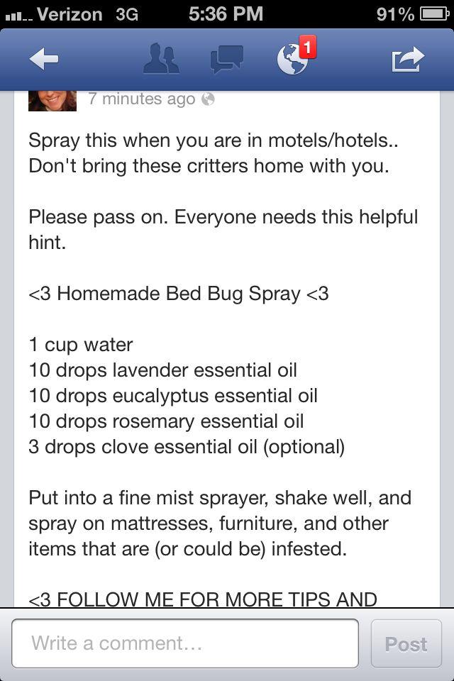 Homemade bed bug spray