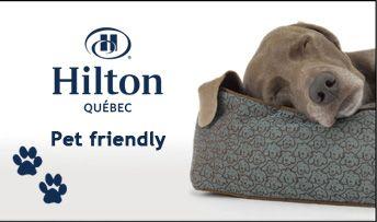 Yup Hilton Quebec is pet friendly :)