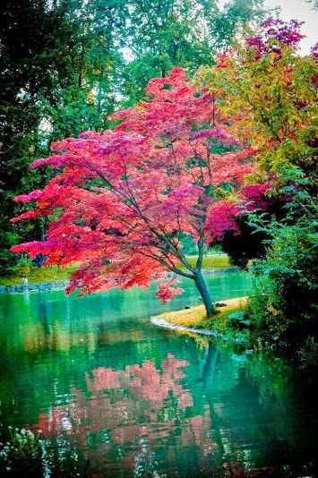 Tree ~ Dreamy Nature: