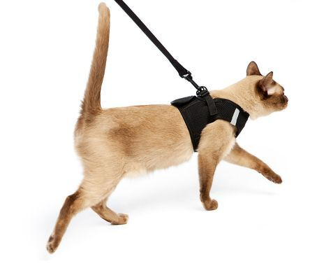 ... Dr. T needs to go on a diet, and I think we could become close if we walked together... Cat Harness Leash