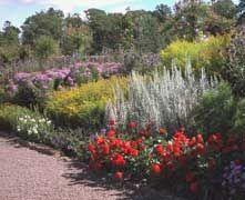 Plantas y flores: diseño con flores anuales, bulbos, césped, macetas