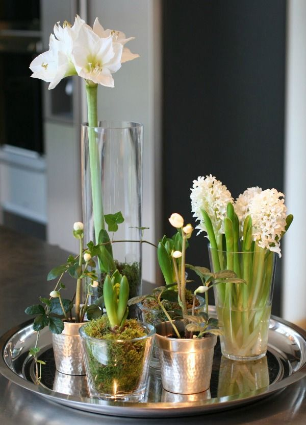 Een stukje lente in huis met bloembollen
