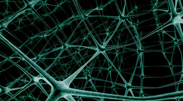 Net Neuron Connection Deep Learning Data Science Best Online Courses