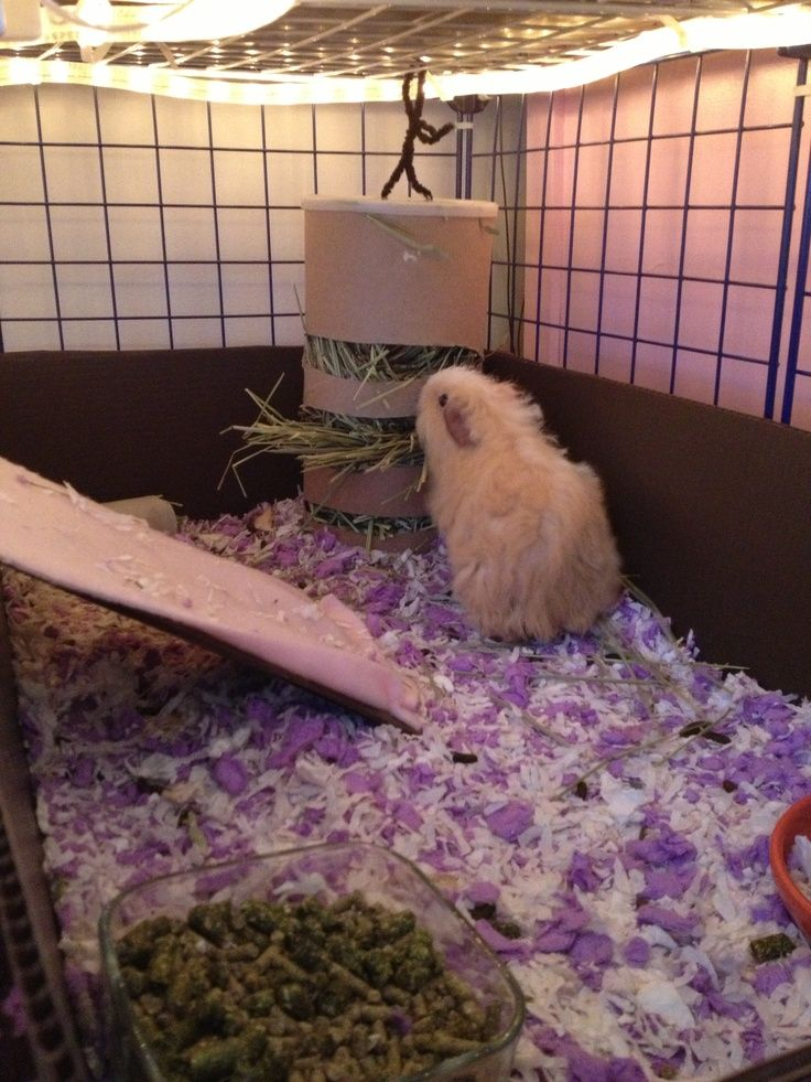 Guinea Pig Cage Ideas | Guinea pig cage ideas for bedding, toys, other. IM DOING THIS WITH EMPTY SALT CAN!!!!