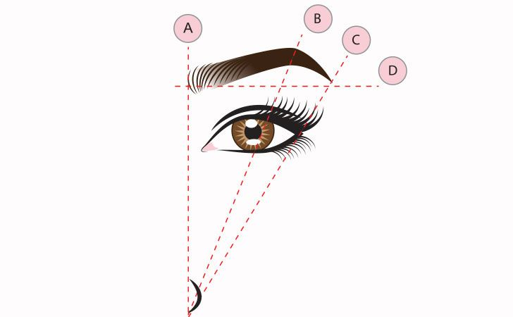 Eyebrow tip