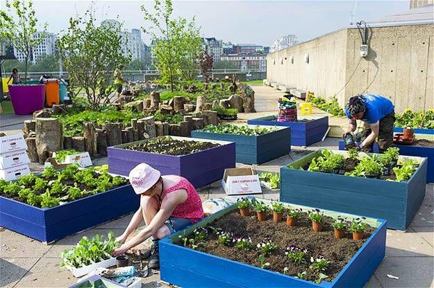 Urban Rooftop Garden Designs Changing, Backyard Vegetable Gardening Project Proposal