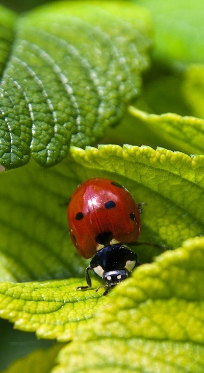 lady bugs bees flowers - photo #19