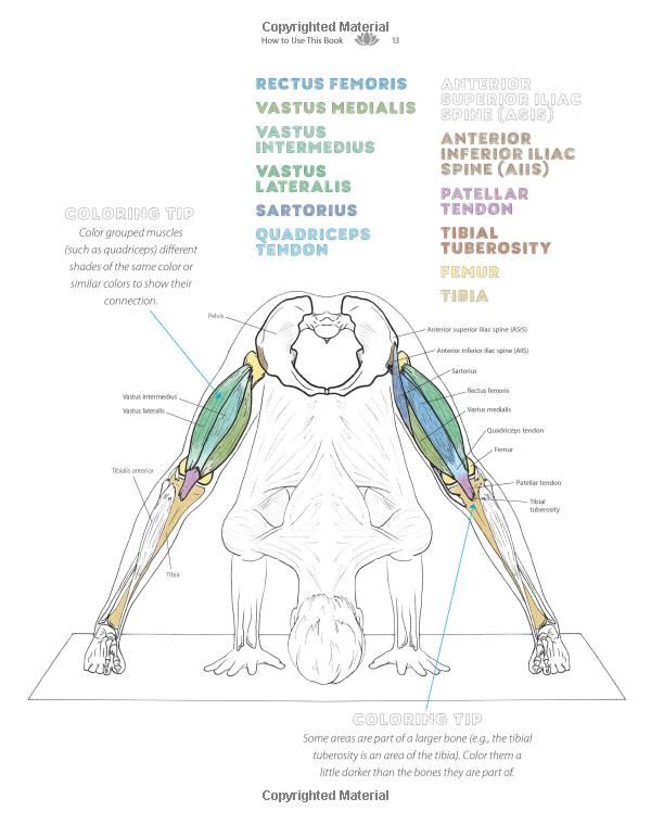 The Yoga Anatomy Coloring Book A Visual Guide To Form Function And Movement 9781640210219 Medicine Hea Anatomy Coloring Book Yoga Anatomy Coloring Books