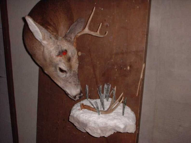 Shed Mount Whitetail Mounts In 2019 Deer Mounts
