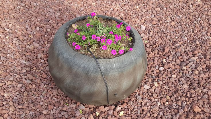 Flipped tire turned into a plant pot