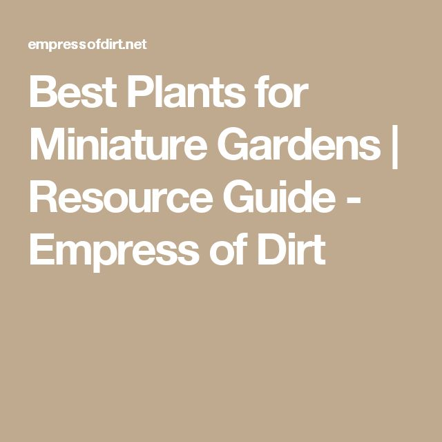 Best Plants for Miniature Gardens | Resource Guide - Empress of Dirt