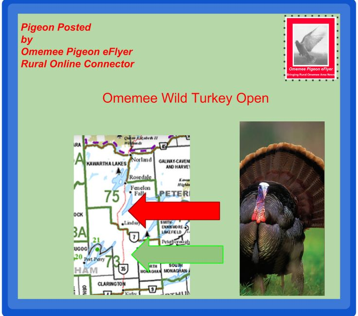 October 14-25  Wild Turkey Hunt in South KawarthaLakes #Ontario