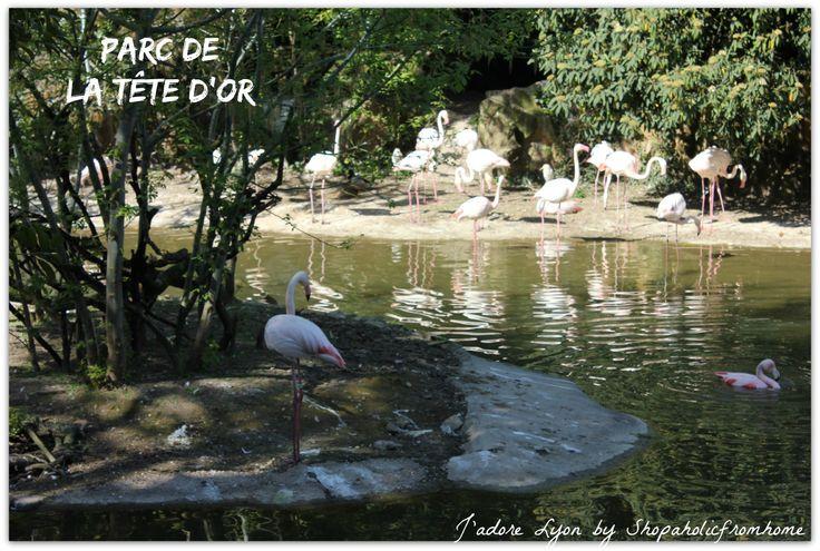 #parks #visitlyon #thingstodo #freelyon #jadorelyon http://shopaholicfromhome.com/my-big-list-of-lyonnais-parcs/ Parc de la Tête d'Or