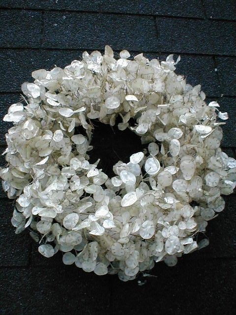 real MONEY PLANT WREATH dried Lunaria Honesty Wreath by BLOSSOMY, $70.00