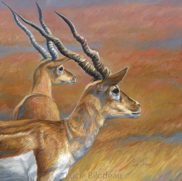 53 Best African Wildlife Paintings By Lucie Bilodeau