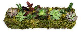 """18"""" Succulent Planter, Live; OneKings Lane; approx. $60"""