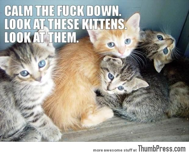 Funny Animal Pictures 2