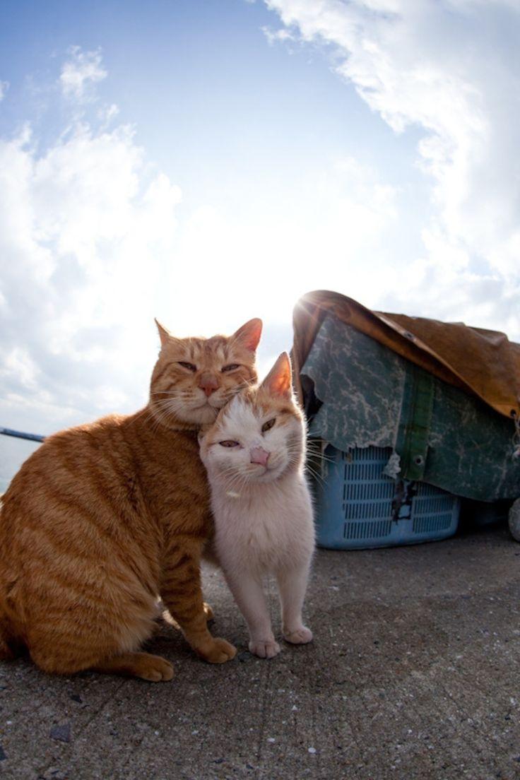 日本では猫天国島から50素晴らしい写真