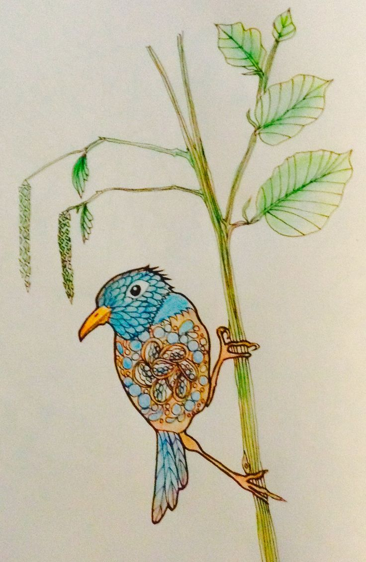 Bird Art Coloring Books Colouring Tangled Vintage Rapunzel Pages Book Artwork