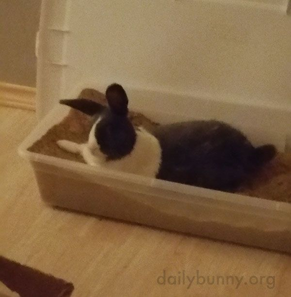 Bunny relaxes in his digging box - December 1, 2016