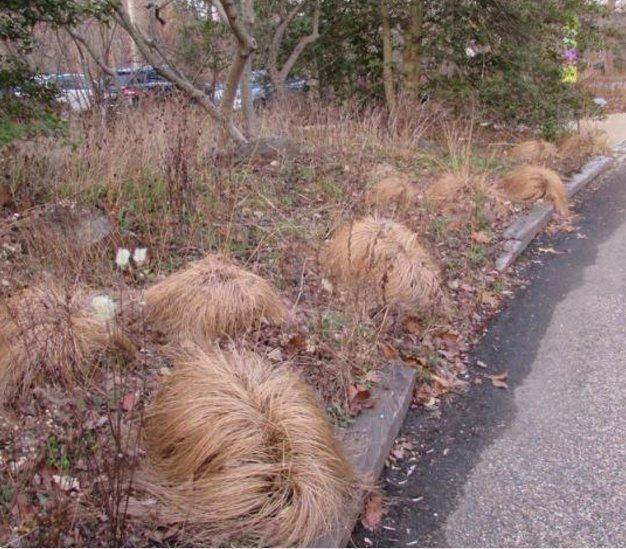 trump wig farm