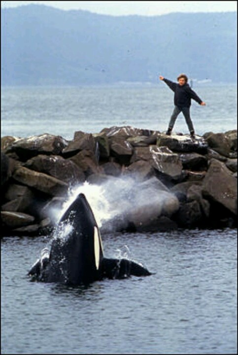 Free Willy.
