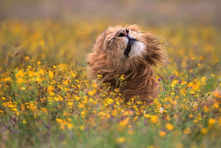 2017 National Geographic Nature Photographer of the Year   National Geographic