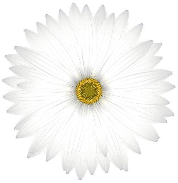 Delicate White Daisy Transparent PNG Clip Art Image