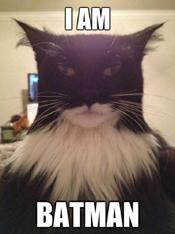 Batman Cat...wonder if I can do this to my cat! She is black and white hehe!