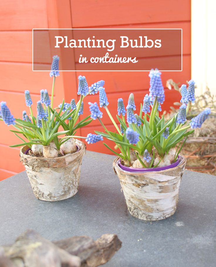 45 best aubergine garden images on pinterest - Landscape elements that you should consider for your yard ...